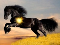 black-animals-horse-2